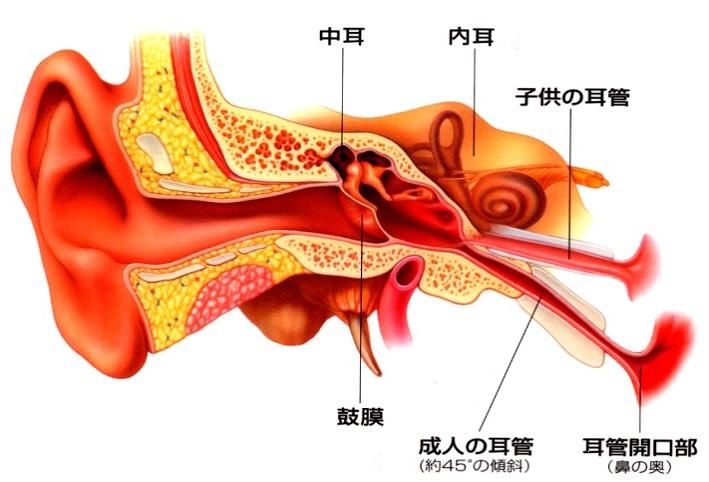 今泉耳鼻咽喉科クリニック/急性中耳炎